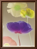 Poppy Suite III Limited Edition Framed Print by Robert Mertens