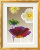 Poppy Suite I Limited Edition Framed Print by Robert Mertens