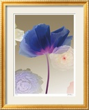 Poppy Suite II Limited Edition Framed Print by Robert Mertens