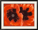 Oriental Poppies, c.1928 Lámina por Georgia O'Keeffe
