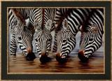 Stripes Posters by H. Van Zanten