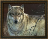 Uninterrupted Stare: Gray Wolf Posters by Joni Johnson-godsy