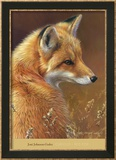 Curious: Red Fox Affiches par Joni Johnson-godsy