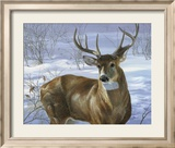 Through My Window: Whitetail Deer Affiche par Joni Johnson-godsy