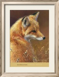 Curious: Red Fox Affiche par Joni Johnson-godsy