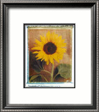 Sunflowers Art by Vincenzo Ferrato