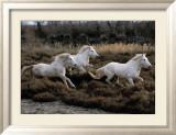 Equus, Camargue, France Planscher av Hans Silvester