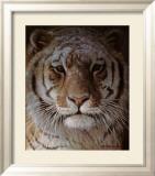 Tiger Portrait Planscher av Robert Bateman