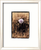 Wildflower I Prints by Troy Kendal