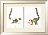 Lemurs Prints by Jean-Baptiste Audebert