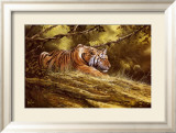 Tiger Resting Prints by Spencer Hodge