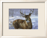 Through My Window: Whitetail Deer Affiches par Joni Johnson-godsy