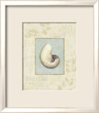 Soothing Words Shells II Posters par Lisa Audit