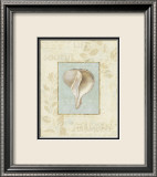 Soothing Words Shells IV Posters par Lisa Audit