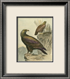 Golden Eagle Prints by F.w. Frohawk
