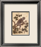Monkey in a Tree I Art by Dianne Krumel