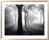 Baume im Nebel I Poster par Tom Weber