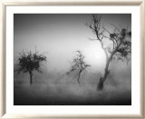 Baume im Nebel II Print by Tom Weber