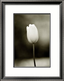 Early Morning Tulip Estampe encadrée par Jerry Koontz