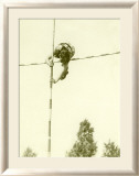 Track and Field, Pole Vault Gerahmter Giclée-Druck