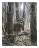 Woodland Sentry Prints by Kevin Daniel