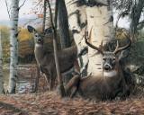 Autumn's Majesty Kunst von Kevin Daniel