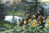 Basking in the Balsams Print by Kevin Daniel