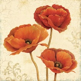 Poppy Bouquet II Prints by Daphne Brissonnet
