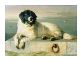 A Distinguished Member Of The Humane Society Posters by Edwin Henry Landseer