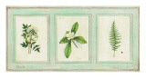 Herbier, Planche 24 Prints by Vincent Jeannerot