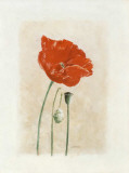 Coquelicot I Posters by Laurence David