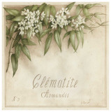 Clematite, Armandii Posters by Vincent Perriol
