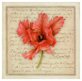 Pink Parrot Tulip Print by Vincent Jeannerot