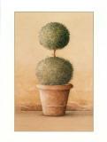 Topiaire I Art par Laurence David