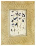 Fleurs des Champs, Ombellifères Prints by Pascal Cessou