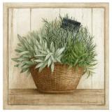 Herbes Aromatiques Affiches par Vincent Jeannerot