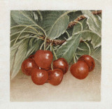 Cerises Prints by Laurence David