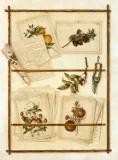 Botanique, Sécateur Poster by Laurent Garosi