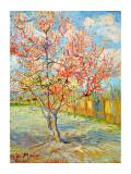 Blommande persikoträd i Arles, 1888 Gicleetryck av Vincent van Gogh