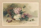 Lilas Affiches par C. Klein