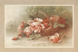 Roses Prints by C. Klein