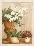 Grande Orchidée II Posters par Vincent Jeannerot
