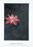 Lotus Print by Edward J. Steichen