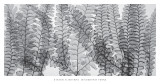 Maidenhair Ferns Prints by Steven N. Meyers