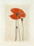 Coquelicot IV Prints by Laurence David