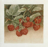 Framboises Posters by Laurence David