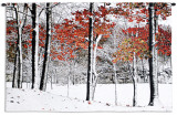 Snowfall Wall Tapestry by Burney Lieberman