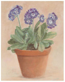 Auricula Bleue Art by Laurence David