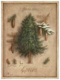 Epicea Print by Vincent Perriol