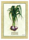 Allium Posters by Vincent Jeannerot